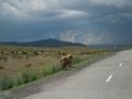 Weg in den Altai