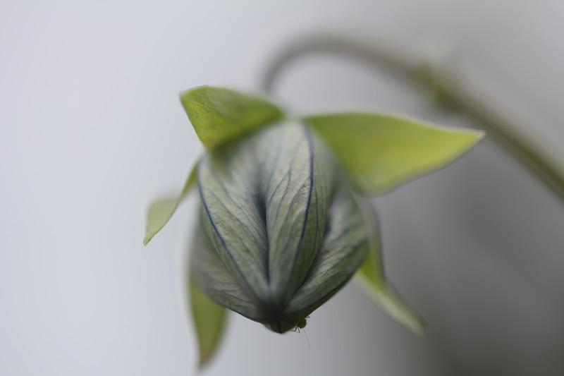 matze-koek-say-flora-01