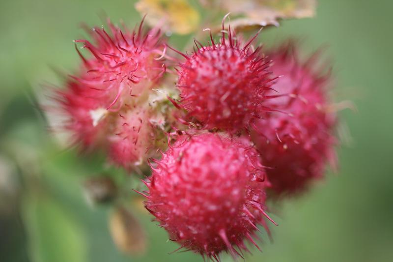 matze-koek-say-flora-03