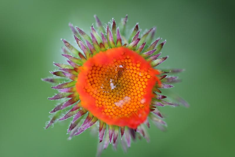 matze-koek-say-flora-04