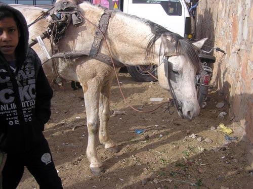 Pferdemarkt Zagora