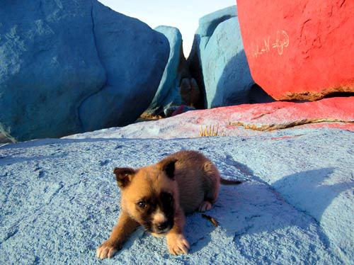 Sidi auf den blauen Felsen